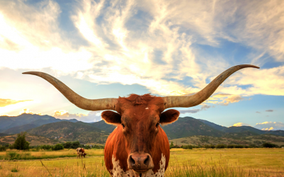 Retirement Tax Facts: 6 Reasons to Settle Down in Texas